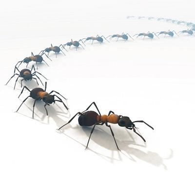 Mejora Continua y la teoria de las hormigas